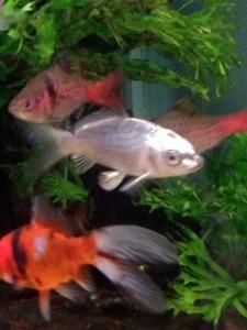 fish green